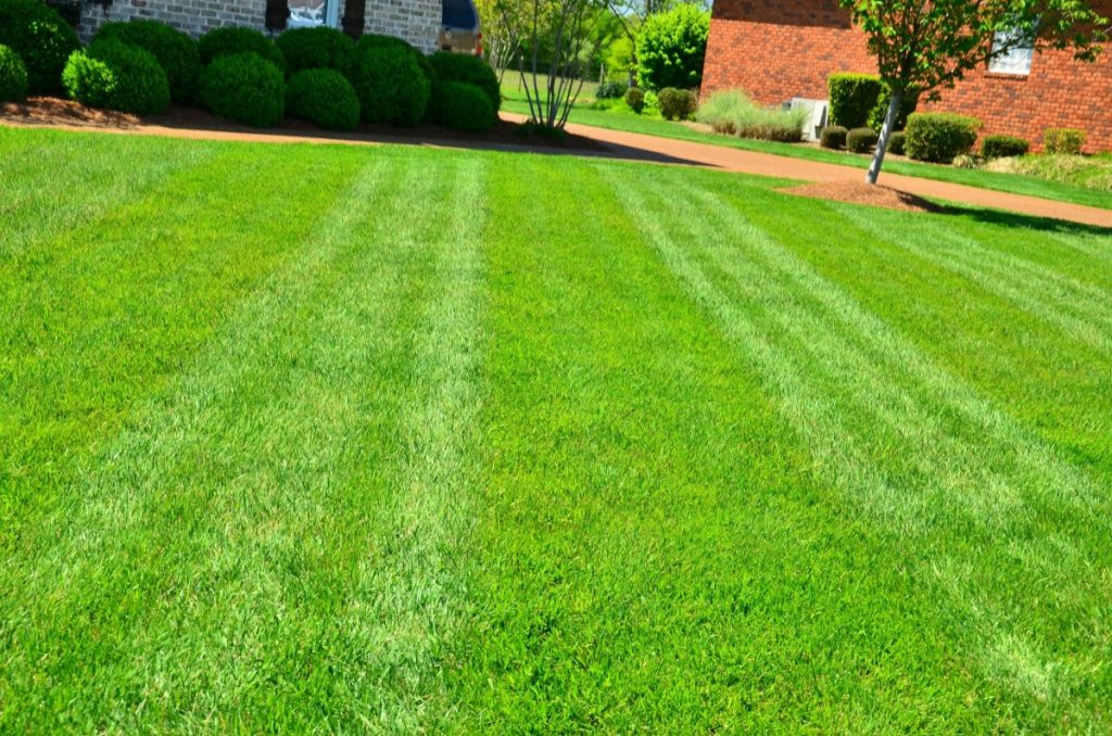 Grass lawn. not sustainable lawn!
