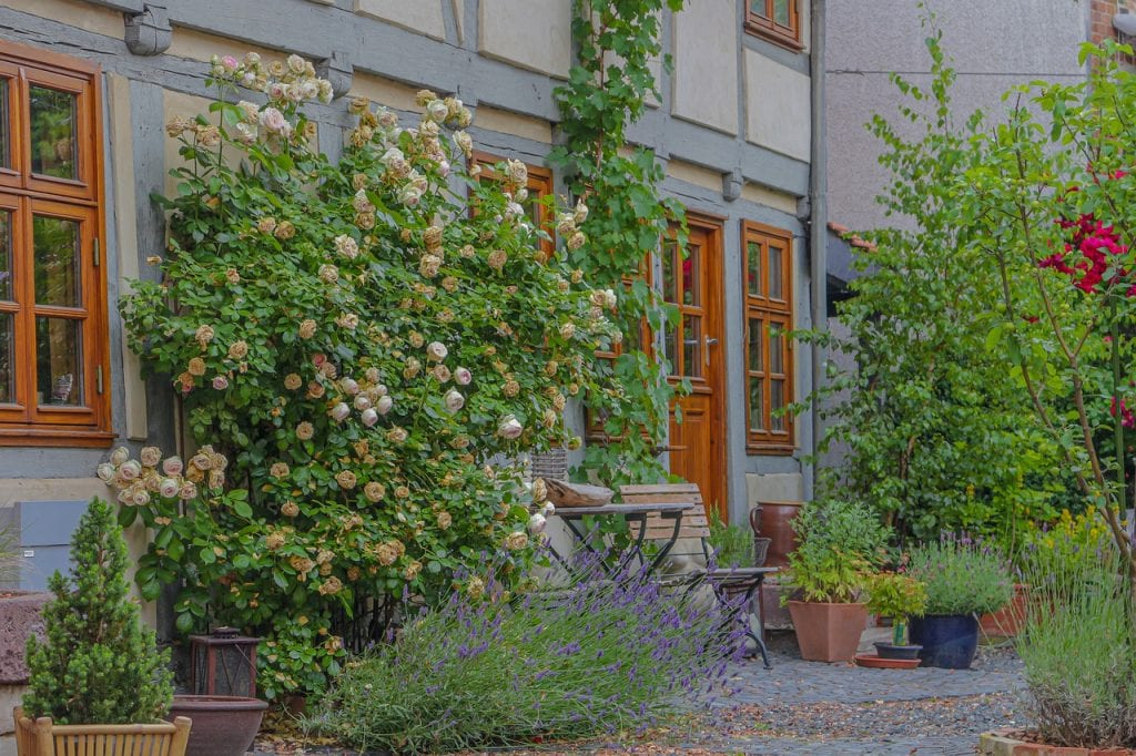 sustainable, low-maintenance backyard
