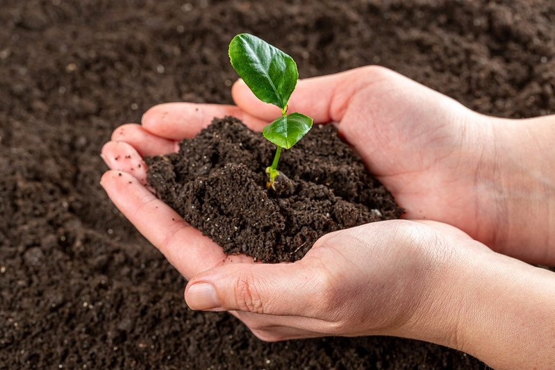 hands holding soil and young plant. live sustainabiy