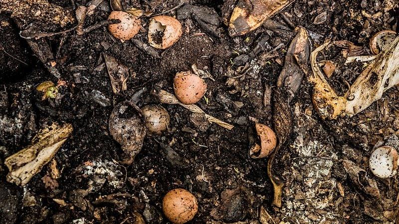 food scraps. make compost