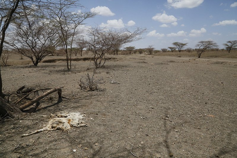 Dried up river bed. Importance of water conservation