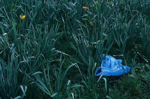 Plastic bag in a garden. reusable bags vs plastic bags